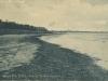 billesborg-strandskov
