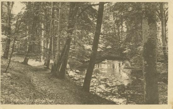lellinge-skoven-1