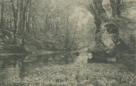 lellingeskoven-2