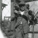 Glimt fra Køges Historie - Køge Dyrepark
