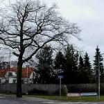Skensved - Kvindeeg og Genforeningssten, Ll. Skensved, hjørnet af Hovedgaden og Ølbyvej